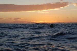 delfin o wschodzie słońca
