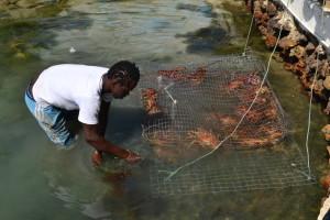 10 - klatka z lobsterami
