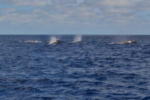 wieloryby - spotkanie 1